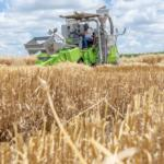 A&M-Commerce Research Project to Aide in Maximizing Wheat Producer Profits in Northeast Texas